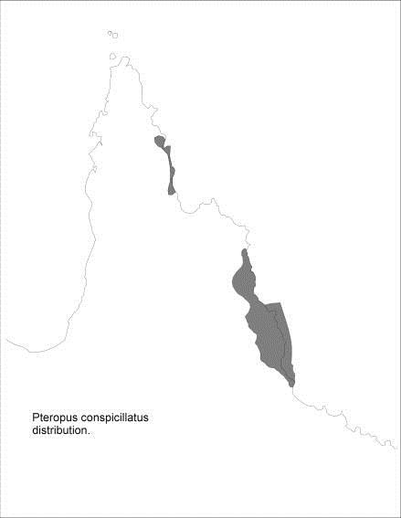 Title: Map of distribution of Spectacled Flying-foxes - Description: Distribution of Spectacled Flying-foxes on far-northern Queensland coastline